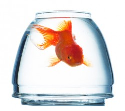 Do you have the attention span of a fish?